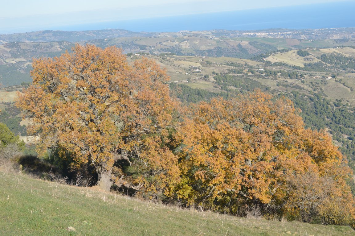 Roverelle-gruppo mostarico | Trebisacce (CS)